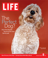 Dog_lifecover